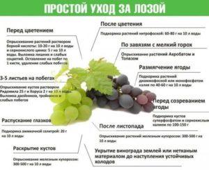 Саженцы - Посадка и уход винограда.. Питомник Омский Садовод.